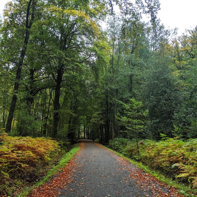 Pathway from Eifelsteig Stage 2 - Roetgen to Monschau